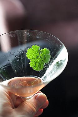 cilantro cocktail