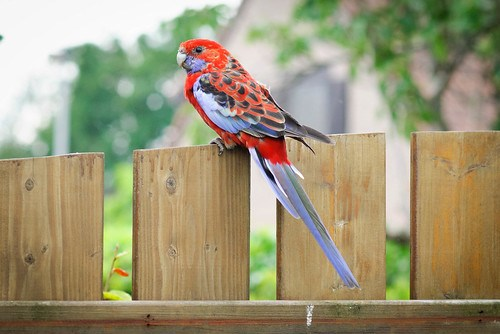 Een vreemde vogel in onze tuin