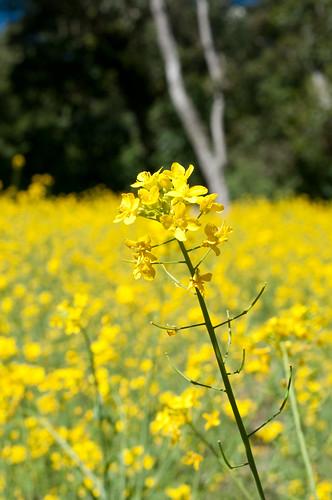 Flower on Lake Chicabal