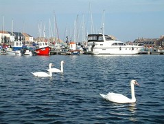 """Sovereign Swans • <a style=""""font-size:0.8em;"""" href=""""http://www.flickr.com/photos/59278968@N07/6325410743/"""" target=""""_blank"""">View on Flickr</a>"""