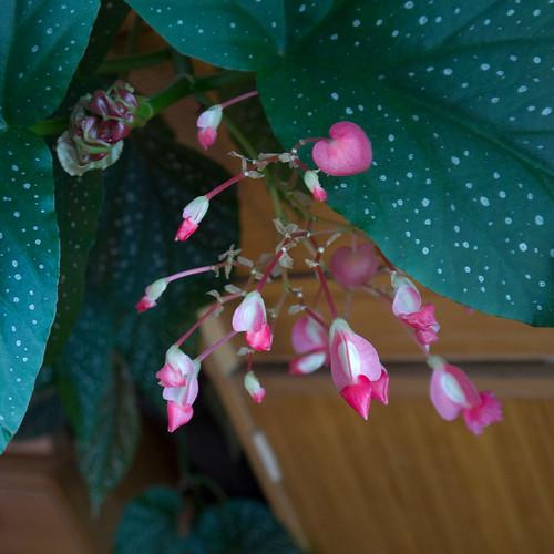 Plants 1.jpg