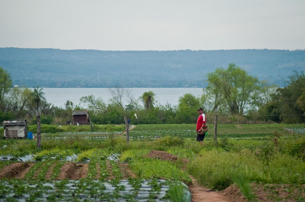 Un productor toma un descanso en su trabajo de cosechar las frutillas maduras en una huerta en la compañía de Estanzuela, Itauguá. Atrás se puede ver parte del lago Ypacaraí y la ciudad de San Bernardino.  (Elton Núñez)