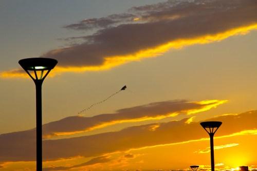 Kite at Sunset