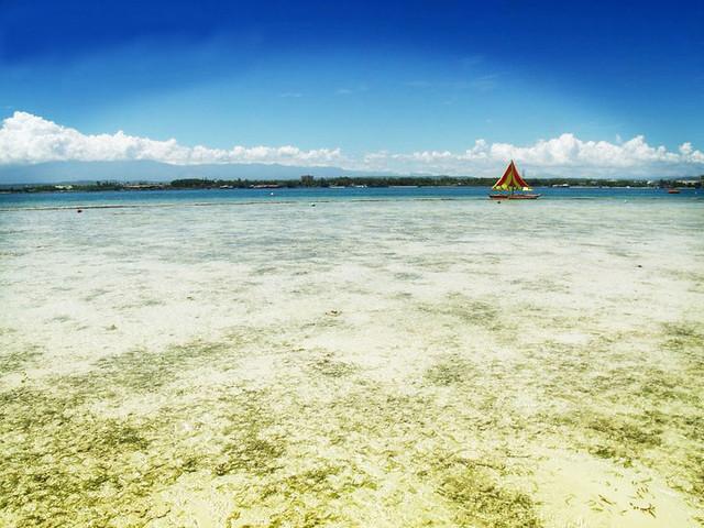 paradise (low tide)