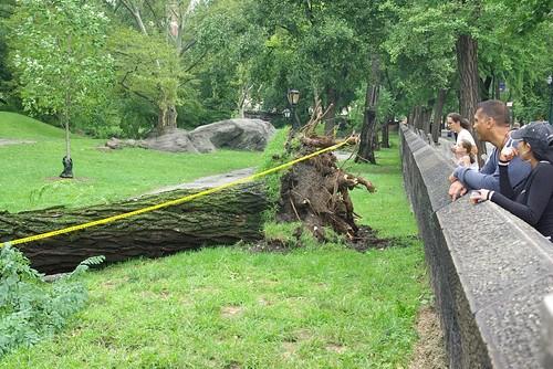 Irene killed this tree