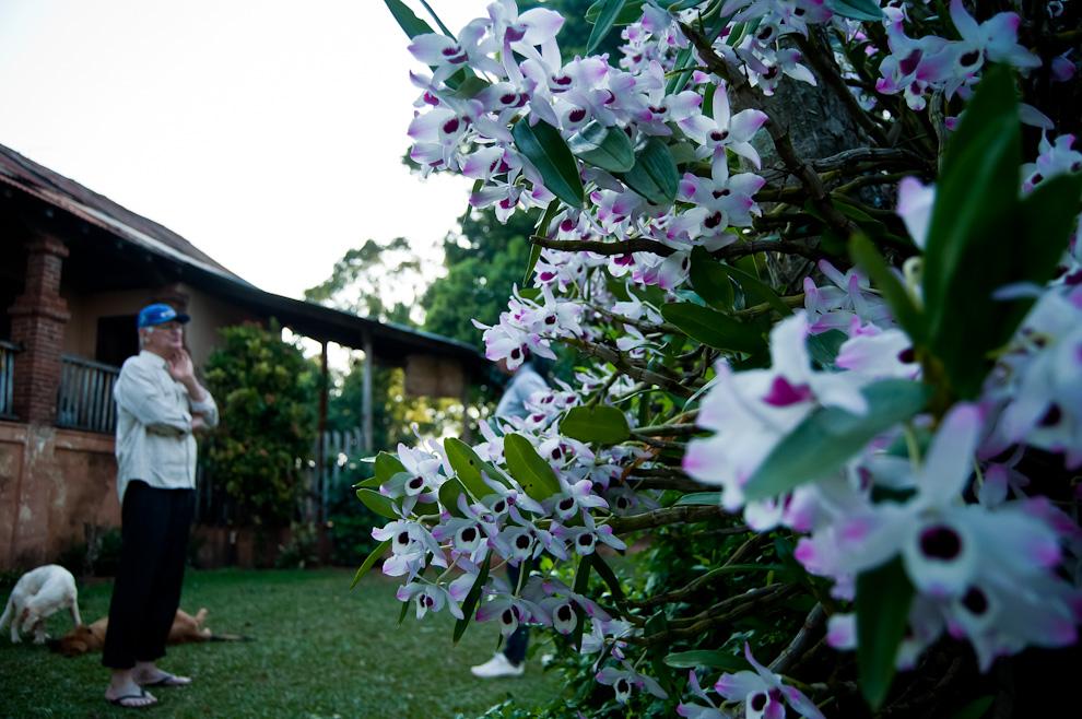 Hermosas orquídeas son vistas en la casa de Eusebio Cortessi, marido de Doña Nidia Dietrich, descendiente de los inmigrantes italianos, mientras nos explica los detalles de su casa de aproximadamente 100 años de antigüedad construida al estilo europeo de los tiempos antiguos. (Elton Núñez)