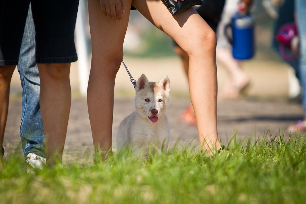 Una niña paseaba a su pequeño cachorro en el Parque. (Tetsu Espósito)