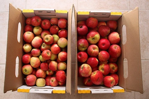 40 pounds of apples