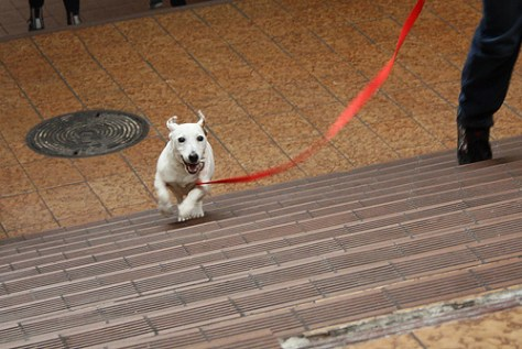 puppy-friend
