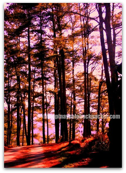 Sagada forest photo