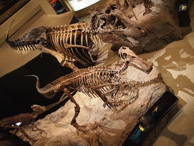 Hadrosaurs and T. Rex