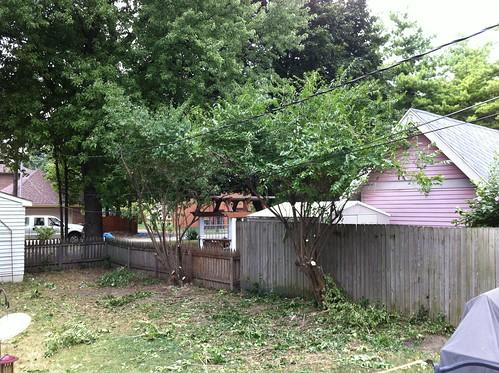 Backyard tree trimming