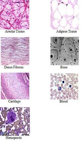Types of Tissue by Madison Lynch on Prezi