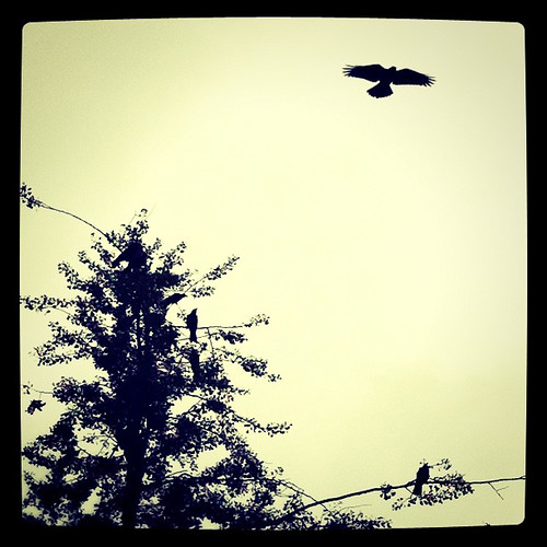 Crows in silhouette-3