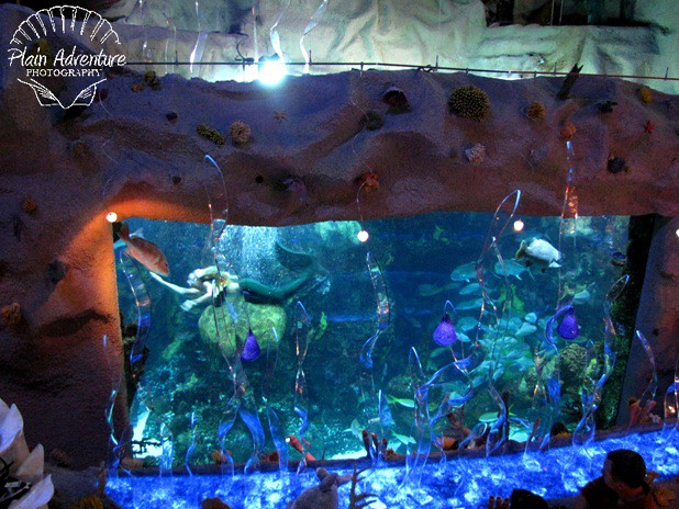 6118965432 3cd87c12e7 z The Downtown Denver Aquarium