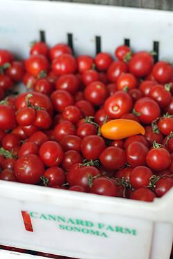 canard farm tomatoes