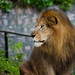 "King of the Jungle • <a style=""font-size:0.8em;"" href=""http://www.flickr.com/photos/41711332@N00/6353420347/"" target=""_blank"">View on Flickr</a>"