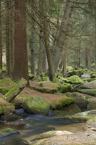 """forest in austria in november • <a style=""""font-size:0.8em;"""" href=""""http://www.flickr.com/photos/22289452@N07/6341006079/"""" target=""""_blank"""">View on Flickr</a>"""