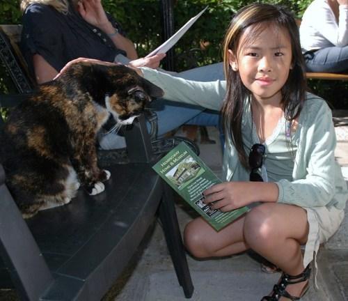 Hemingway cat, Key West
