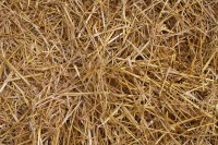 Straw or hay bedding on ground at the Minnesota State Fair ...