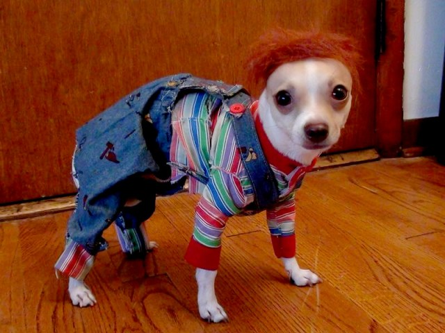 Chucky costume for dog's or pets