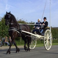 The Friesian Sjees