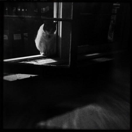 Film noir cat