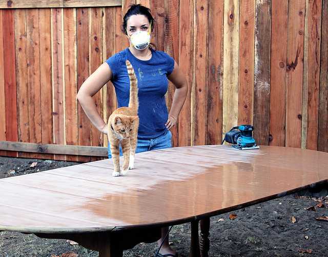Loki interrupts sanding on dining table