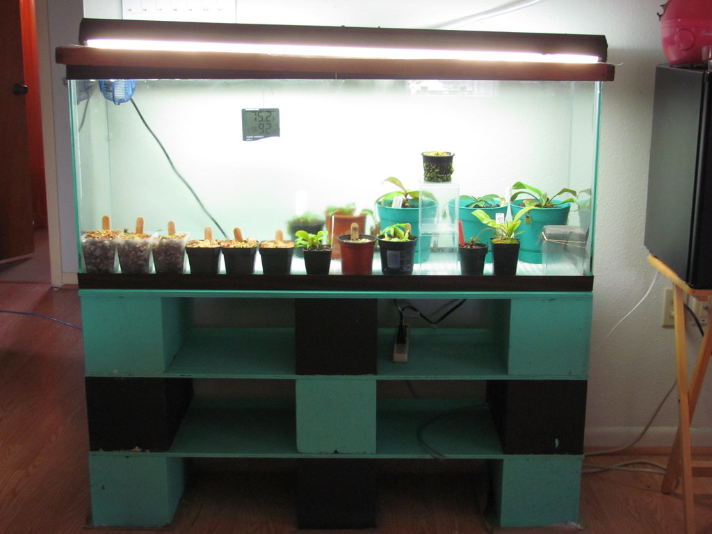 Diy Terrarium Stand The World 39s Most Recently Posted Photos Of 55 And Gallon