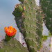 Flor de Cactus  &lt;a style=&quot;font-size:0.8em;&quot; href=&quot;http://www.flickr.com/photos/18785454@N00/7445616532/&quot; target=&quot;_blank&quot;&gt;View on Flickr&lt;/a&gt;