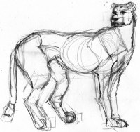 Rough sketch of a cheetah
