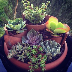 Tiered succulent container garden