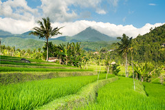 """Bali la belle...Bali the beautiful... • <a style=""""font-size:0.8em;"""" href=""""http://www.flickr.com/photos/48563015@N07/26493804594/"""" target=""""_blank"""">View on Flickr</a>"""