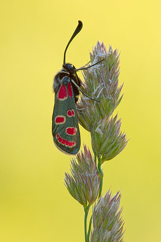"""redgreenyellowbug • <a style=""""font-size:0.8em;"""" href=""""http://www.flickr.com/photos/22289452@N07/9035118219/"""" target=""""_blank"""">View on Flickr</a>"""