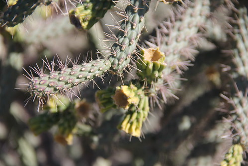 Phoenix in February