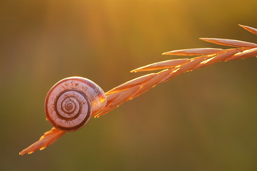 "Snail on a blade of grass • <a style=""font-size:0.8em;"" href=""http://www.flickr.com/photos/22289452@N07/9538385629/"" target=""_blank"">View on Flickr</a>"