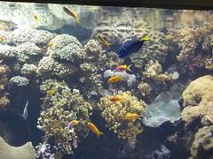 Poissons à l'Aquarium Lisbonne