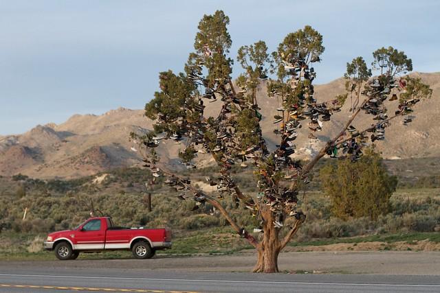 Nice Shoe Tree