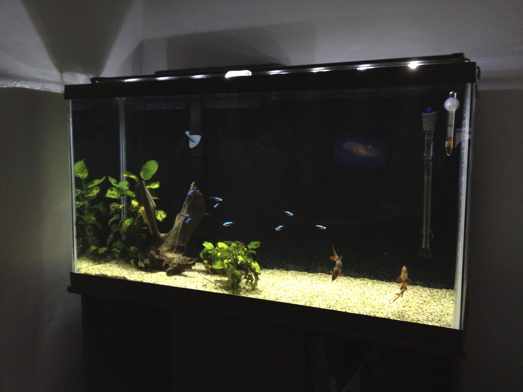 40 Gallon Low Tech New Plants The Planted Tank Forum