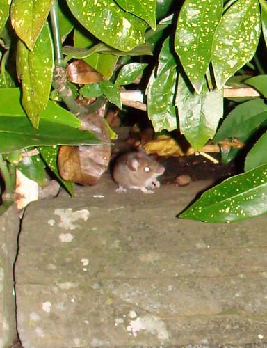 Surprise mouse