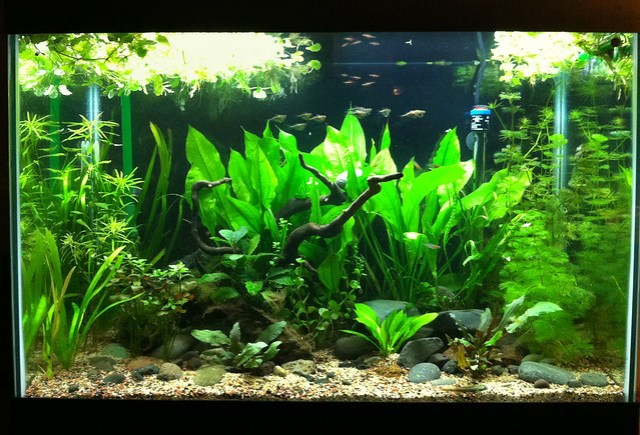 between plants and fish? Any suggestions for me in the scaping here