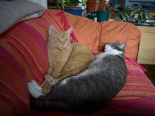New Cats 34.jpg