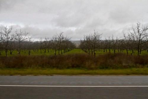 wine grows on trees