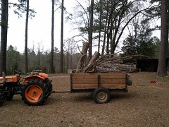 Pine tree all loaded up, no firewood here.