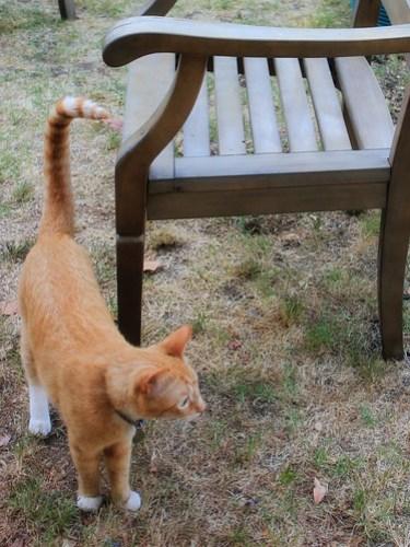 Feline Friday: He