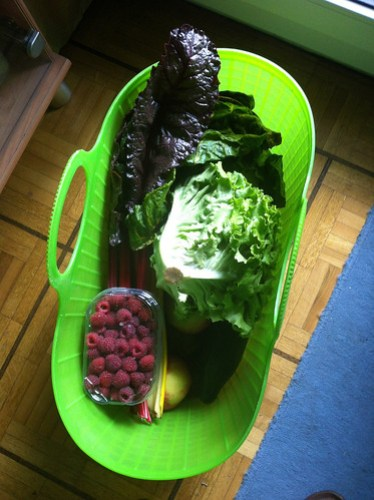 3rd and last basket of veggies for the summer