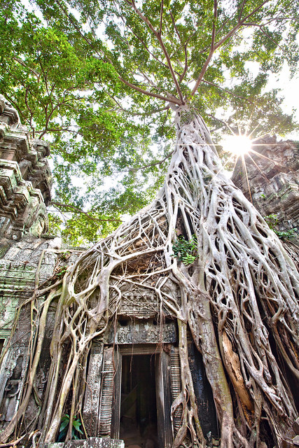 ta prohm, Ang Kor Wat, Siam Reap, Cambodia