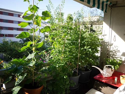 Overgrown balcony