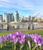 False Creek Seawall in Spring