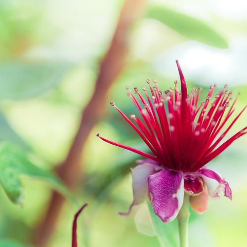 Flower by ►CubaGallery